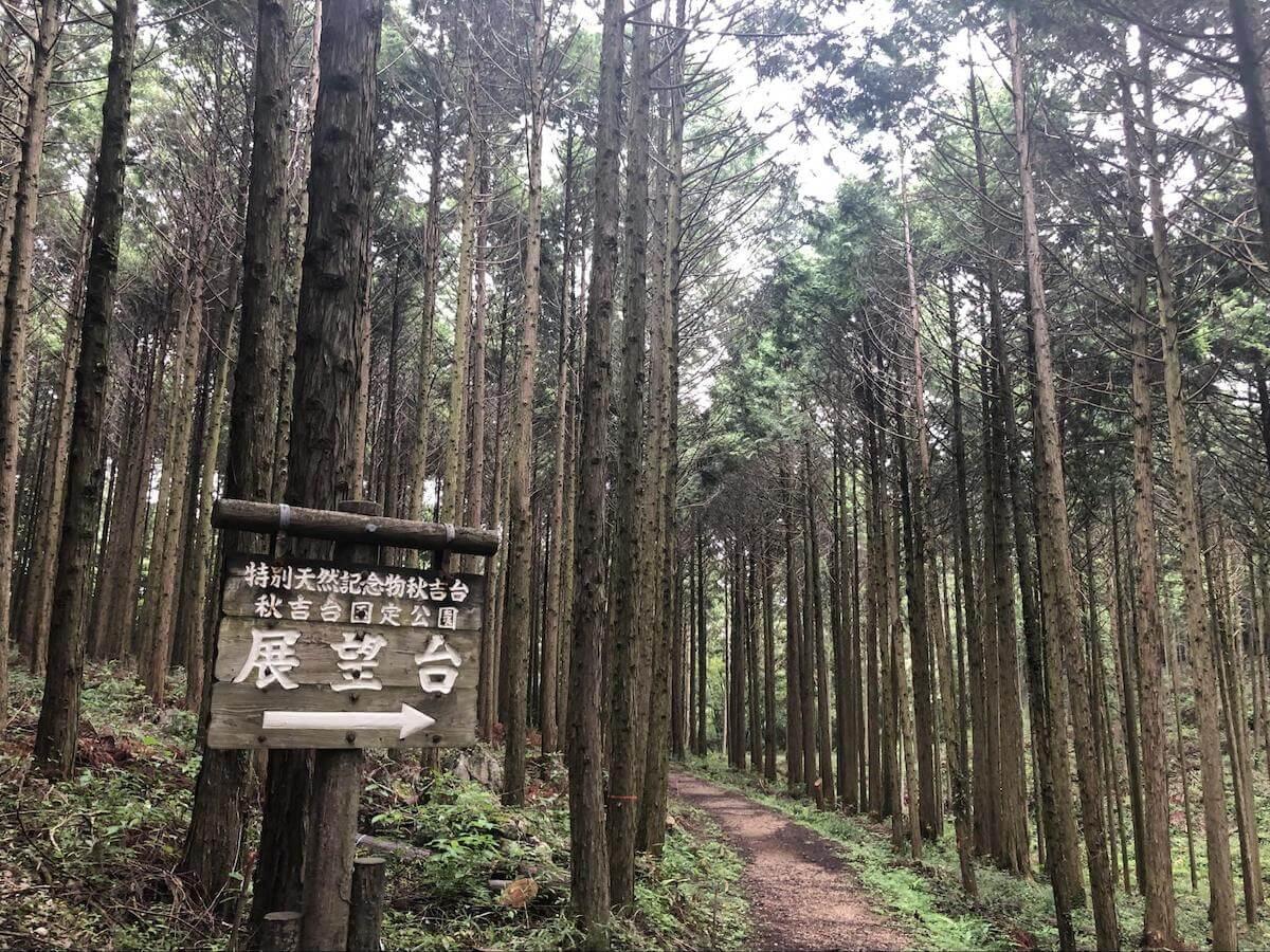 秋吉台カルスト展望台に続く山道の写真