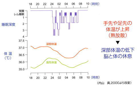 睡眠深度と体温の変化の表
